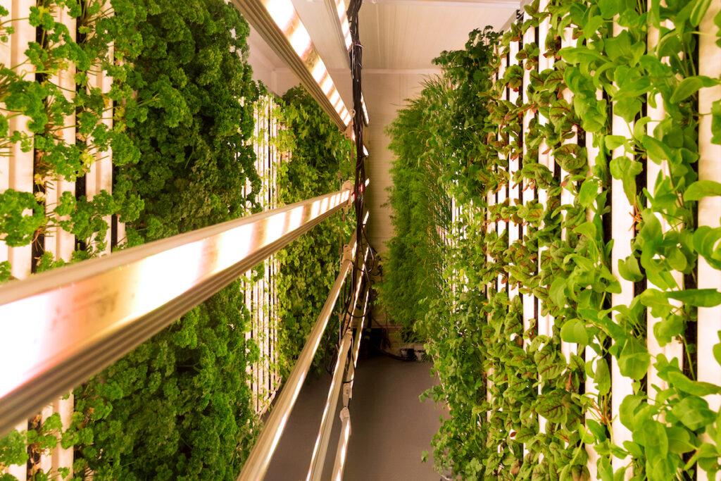 Paddington rooftop vertical farming - Square Mile Farms   BTR News