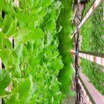 Square Mile Farms, Paddington Central | BTR News