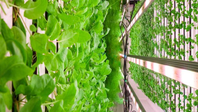 Square Mile Farms, Paddington Central   BTR News